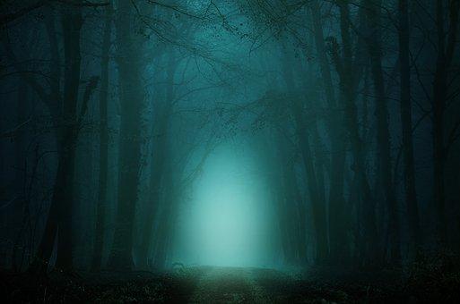 Wald, Weg, Nebel, Bäume, Atmosphäre