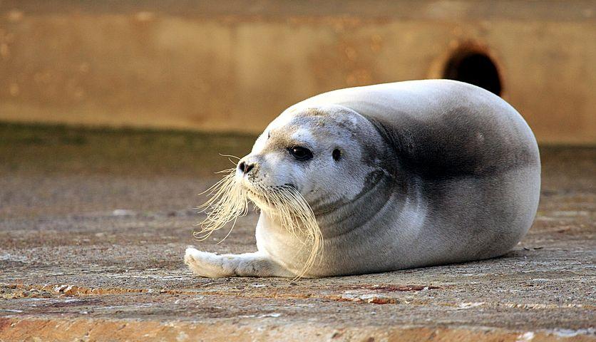 Картинка тюленя смешная, днем