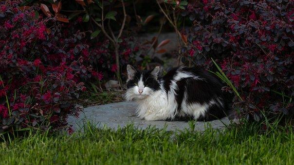 Kucing, Hitam Putih, Merah, Hijau