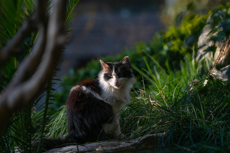 Černý phat kočička obrázek
