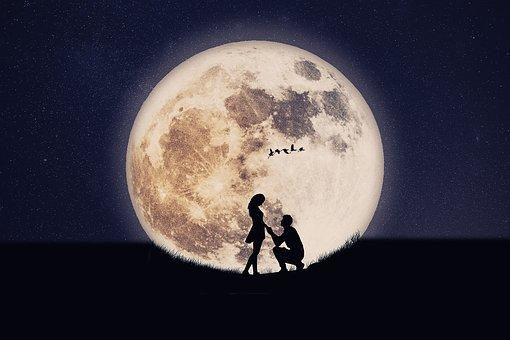 操作, シルエット, ロマンチック, 愛, カップル, 月, 鳥