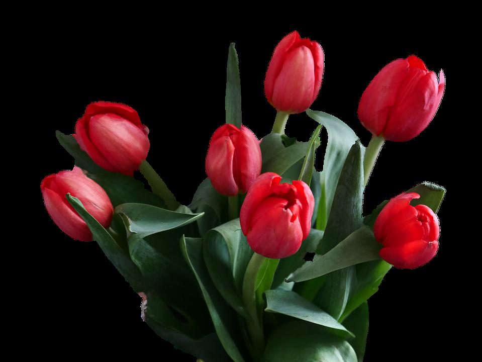 Flover Bukiet Tulipanów Tulipany - Darmowe zdjęcie na Pixabay