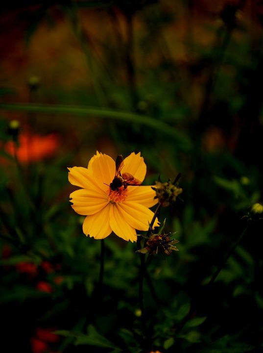 edcf294aada3 Bee Kvetina Príroda - Fotografia zdarma na Pixabay