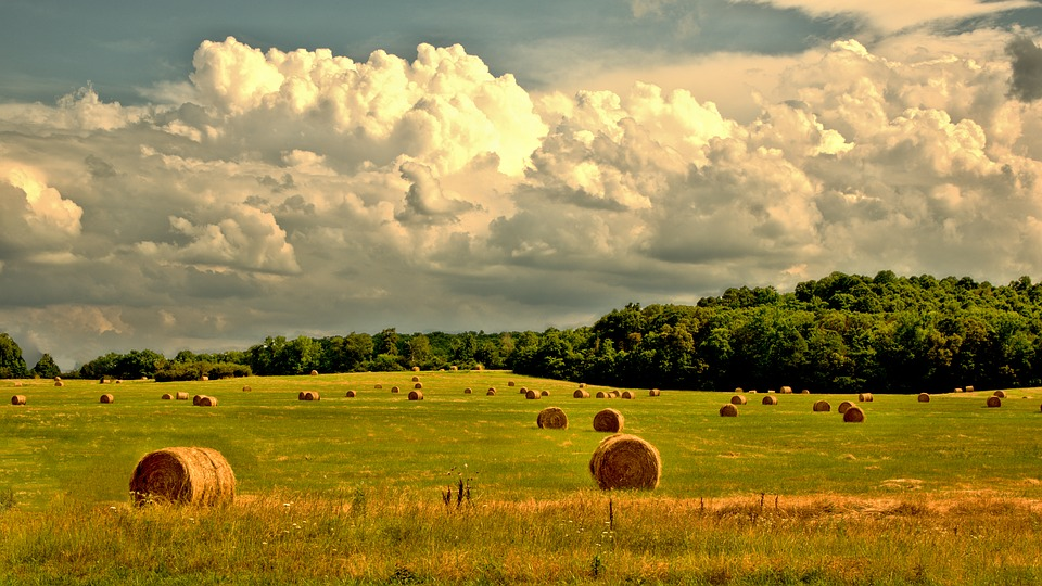 Rural, Farm, Countryside, Landscape, Field, Summer