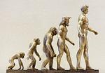 Evolution, From PixabayPhotos