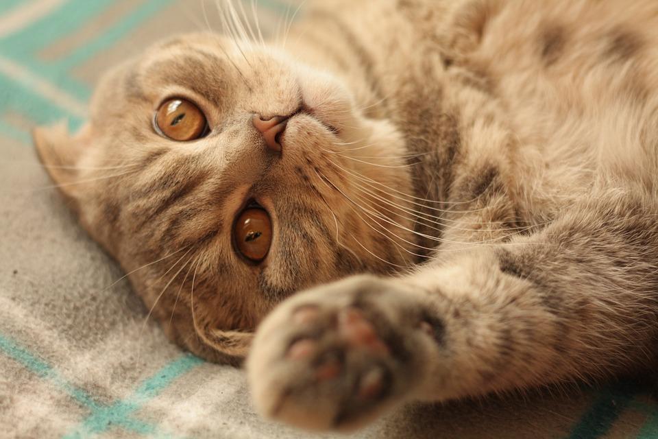 mladá velká kočička