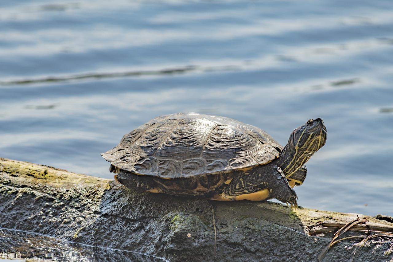 использовании, картинки черепаха из м фото есть