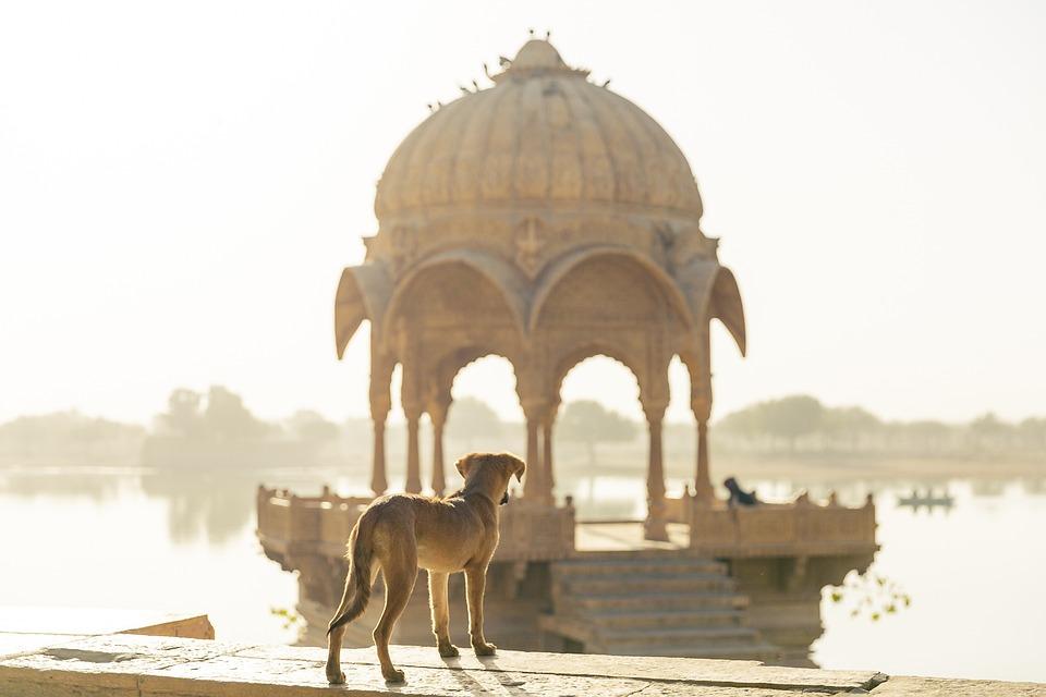 Pies, Podróży, Indie, Podróż, Dziedzictwa, Turystyki