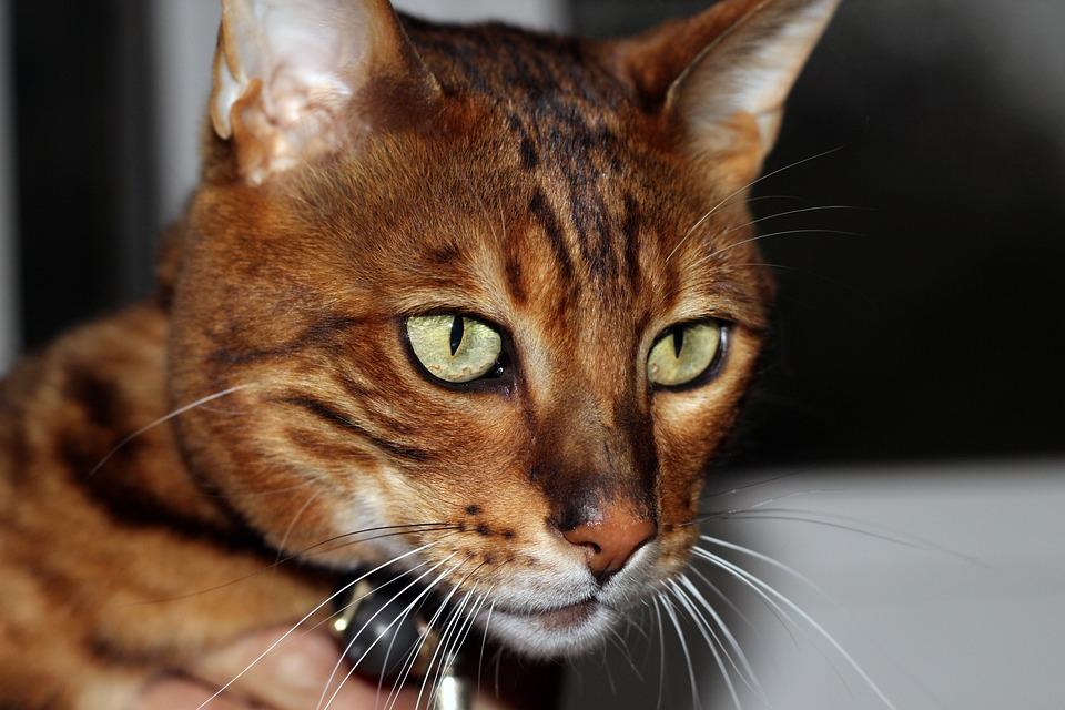d31d0be1b49e Γάτες Ζώα Κατοικίδια - Δωρεάν φωτογραφία στο Pixabay