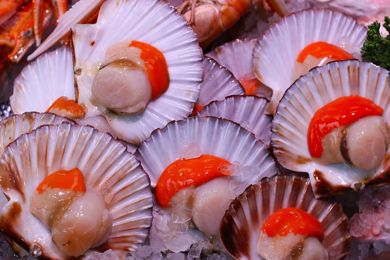 fresh scallops nutrition