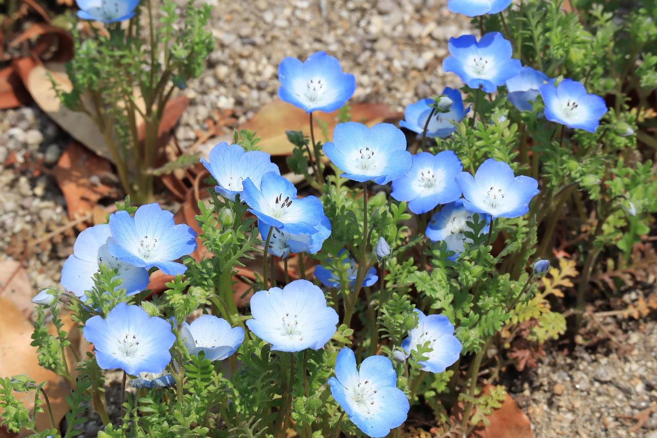 自然 植物 花 Pixabayの無料写真