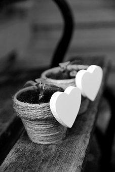 200 Cuore Nero E Cuore Immagini Gratis Pixabay