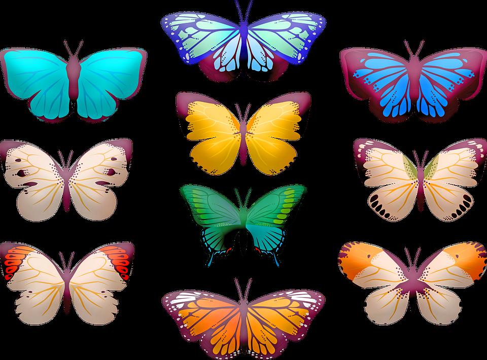 Butterfly Clip Art, Sommerfugle, Insekt, Sommerfugl