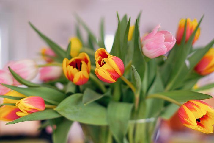 атрибутом картинка тюльпаны для галины уверяют, что