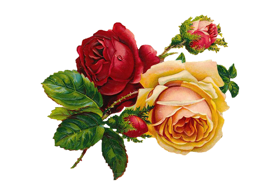 Mawar Vintage Buket Bunga Gambar Gratis Di Pixabay