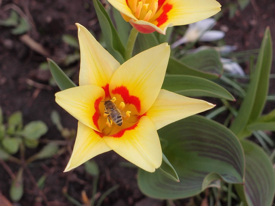 Blumen Frühling Frühlingsblumen Kostenloses Foto Auf Pixabay