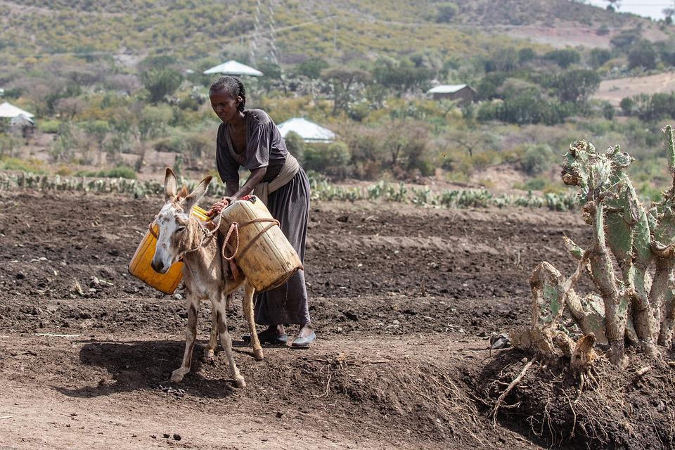 Ethiopia, Africa, Poverty, Agriculture, Donkey, Water