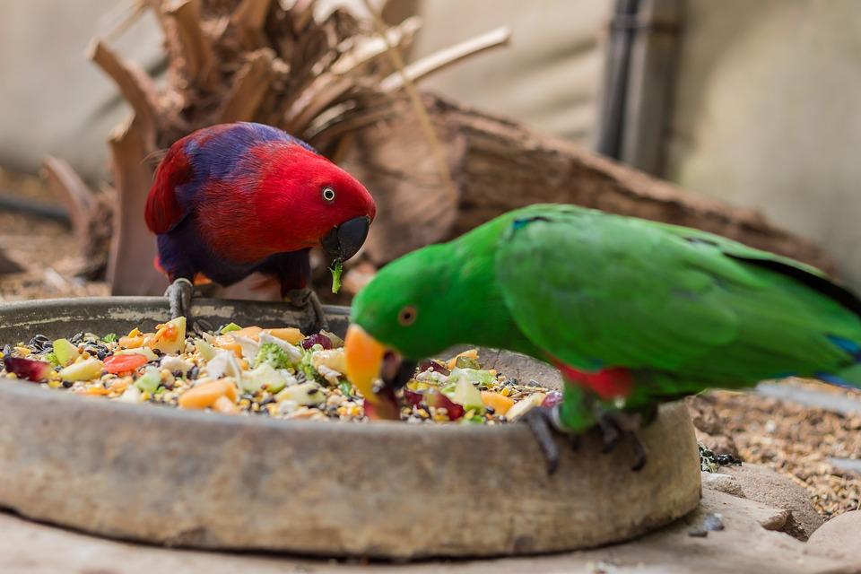 Resultado de imagen para bird eat fruit