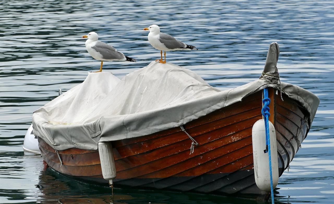 подумала, что човни чайки картинки считается служебной, может