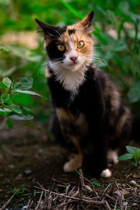Úžasná velká kočička