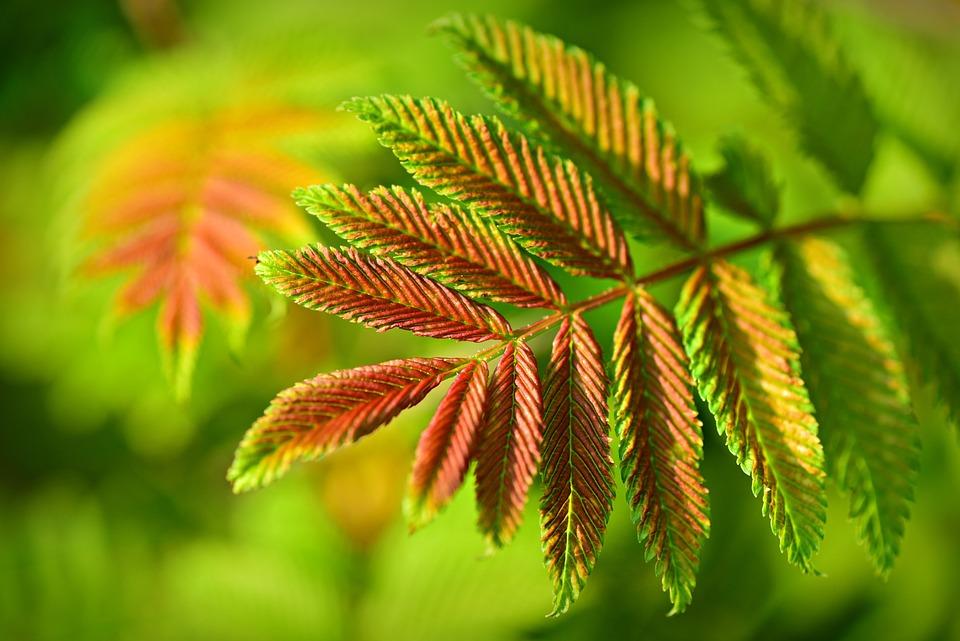 Feuilles, Arbuste, Patron, Forme, Veine, Nature