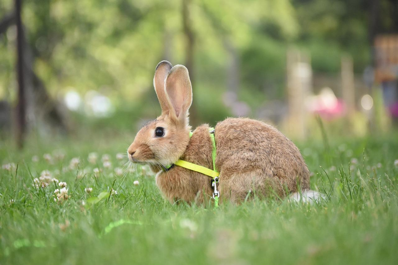 картинки луг кролики