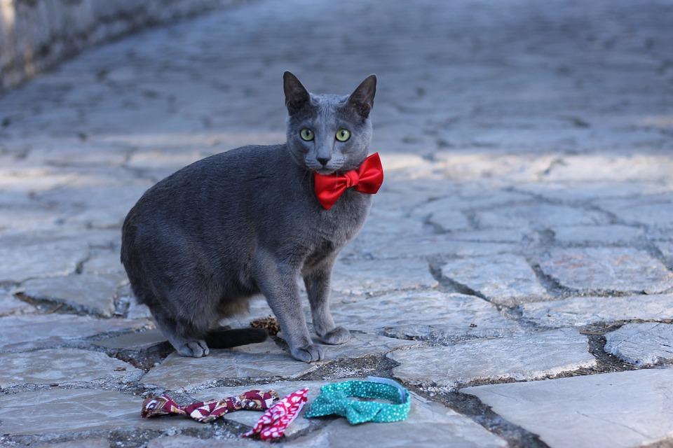 ba398909f018 Γάτα Κατοικίδιο Ζώο Κατοικίδια Ζώα - Δωρεάν φωτογραφία στο Pixabay