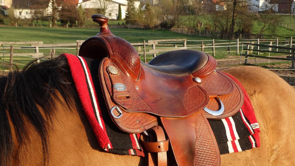 Saddle, Cowboy, Western, Horses, Ranch, Rodeo, Nature