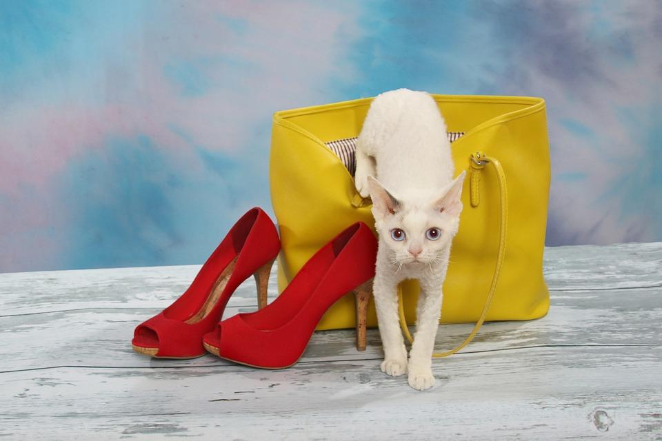 velké boty a kočička