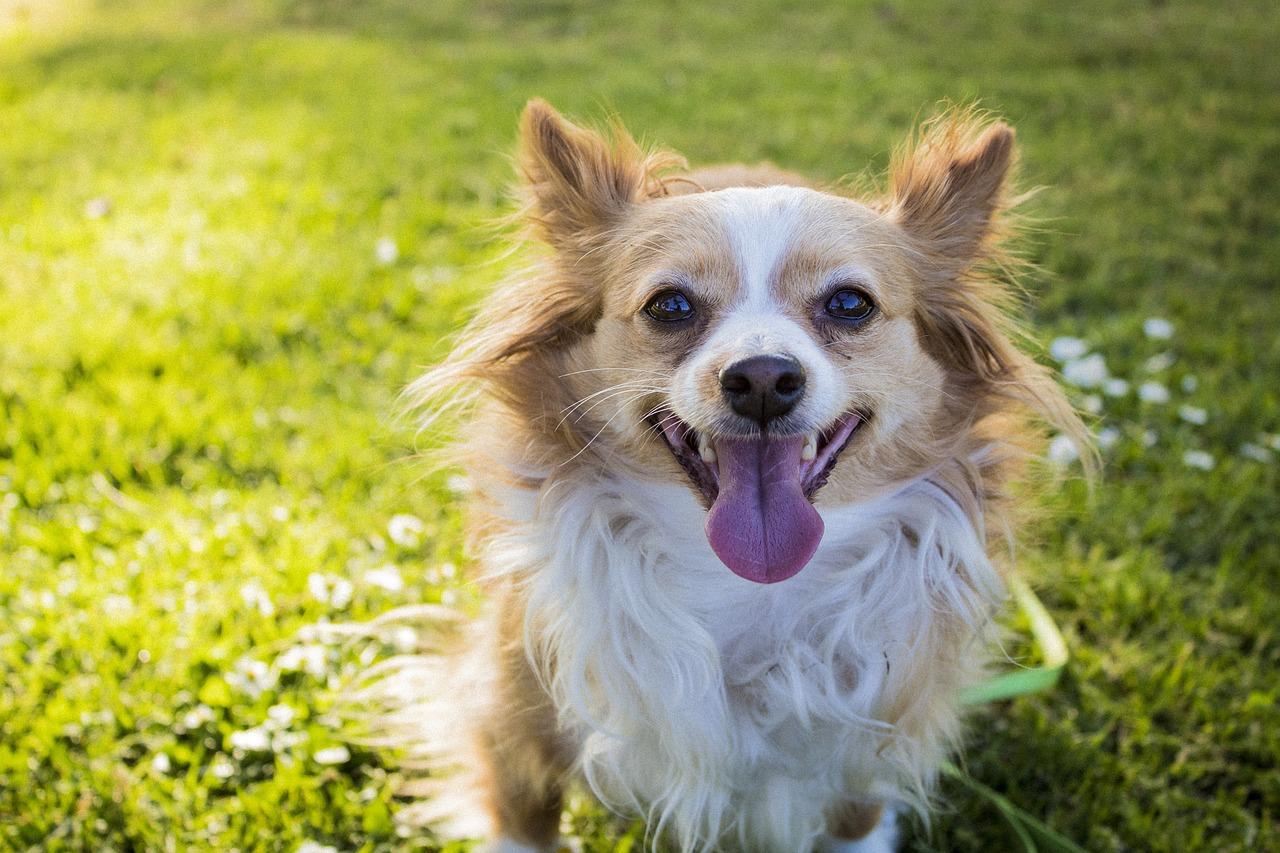 Brushing up on Dog's Dental Hygiene