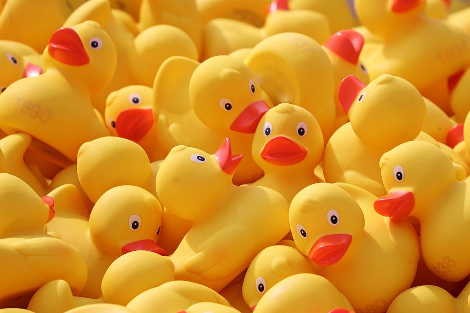 鴨応, アヒル, ゴム製のアヒル, プラスチック鴨, ダックレース, 競争, おもちゃ, 黄色鴨, レース