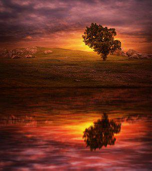 Sunset, Tree, Lake, Reflection, Sunrise