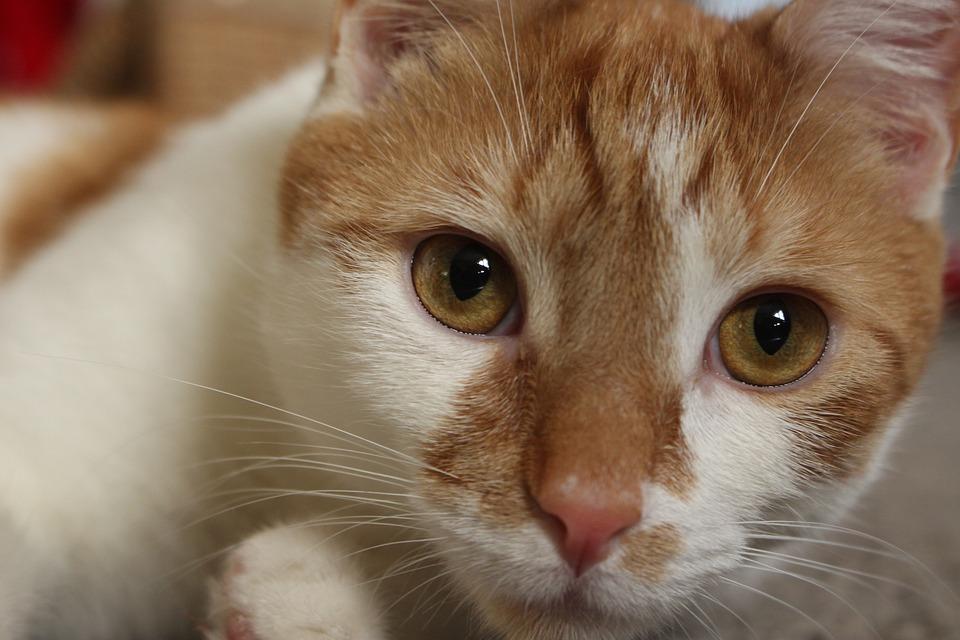 62156282984b Γάτα Γατάκι Πορτοκάλι - Δωρεάν φωτογραφία στο Pixabay