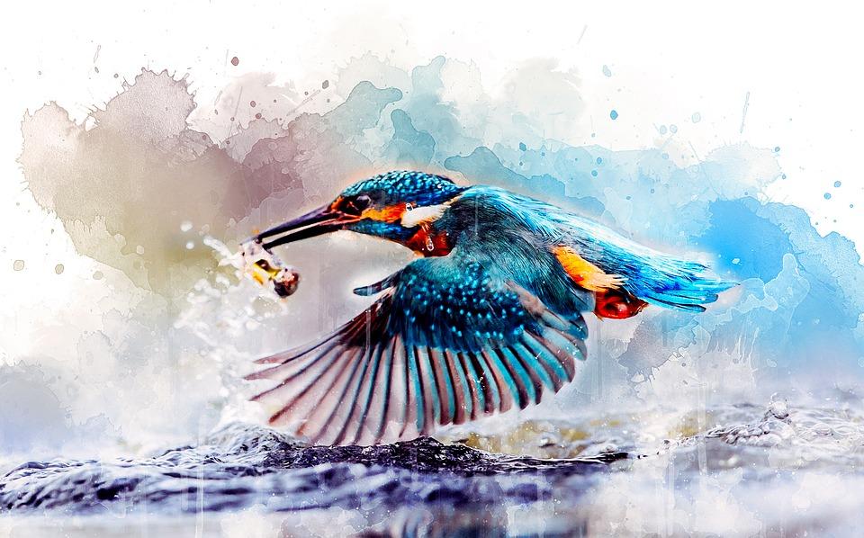 Aquarelle, Martin Pêcheur, Oiseau, Nature, Artistiques