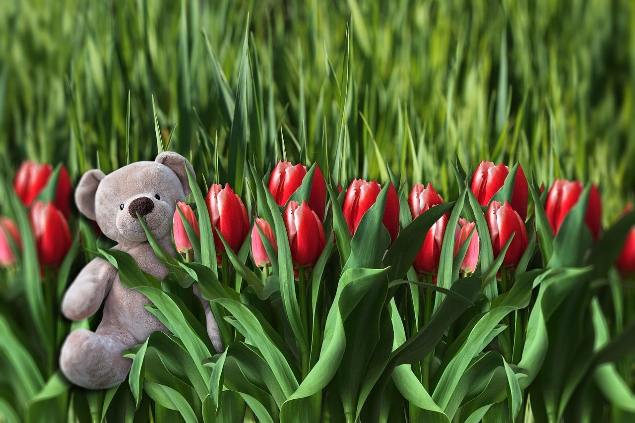 смотреть картинки с тюльпанами многолетние