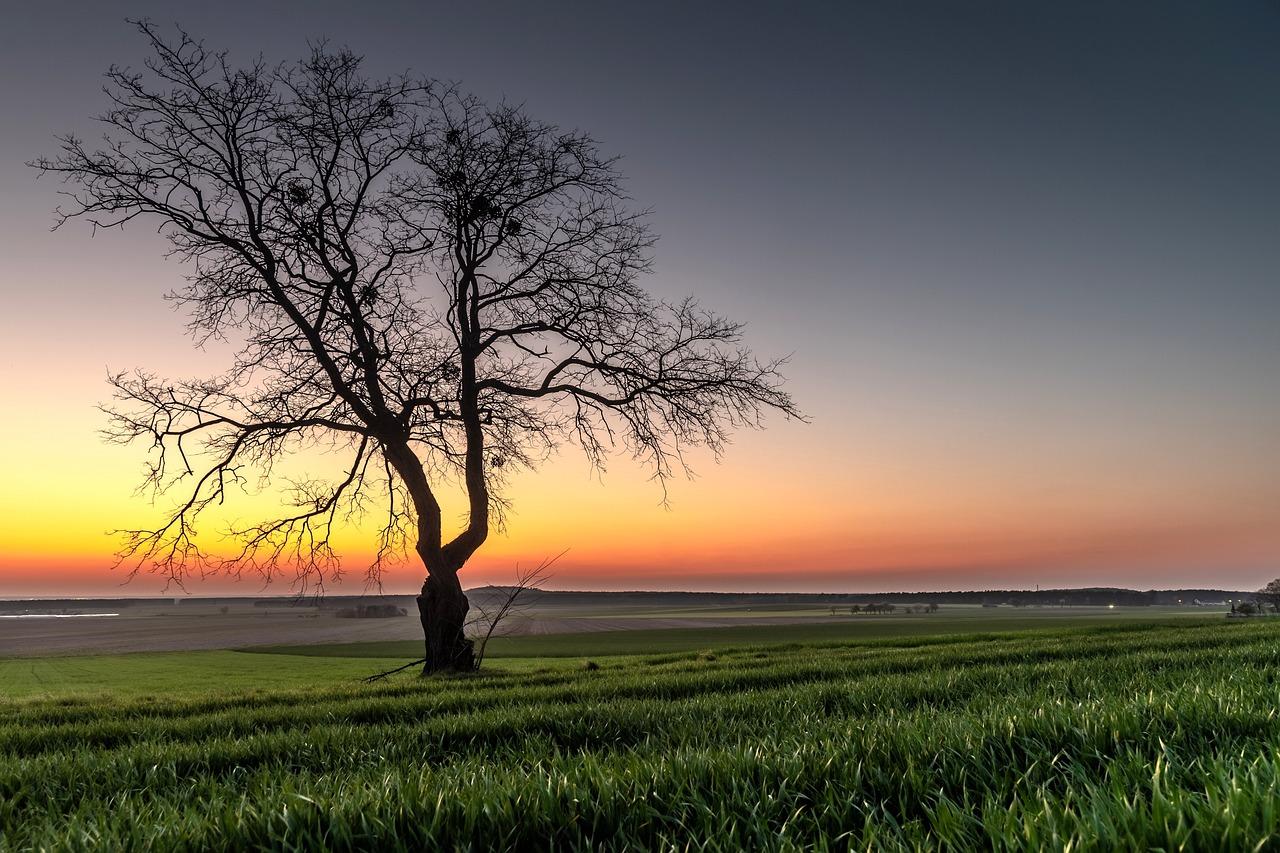 нерезкие шикарные фотообои одинокое дерево остаётся центром