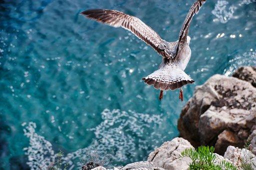 Fiskmås, Flygning, Flyga, Rörelse