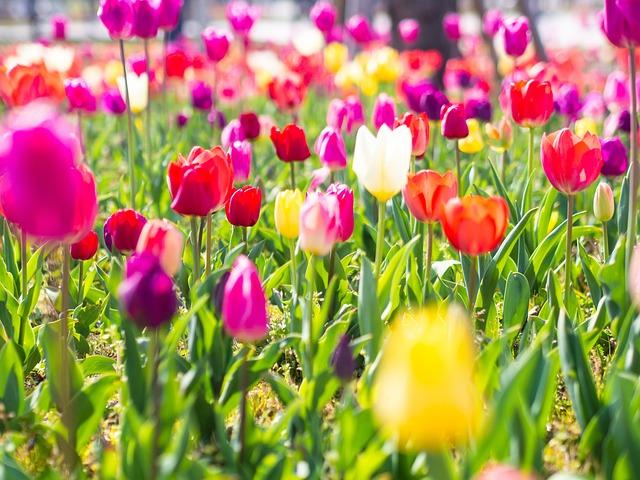 Tulip Bunga Kuning Warna Foto Gratis Di Pixabay