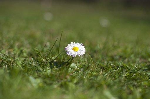 Comment planter des bulbes à fleurs pour obtenir des fleurs au printemps prochain