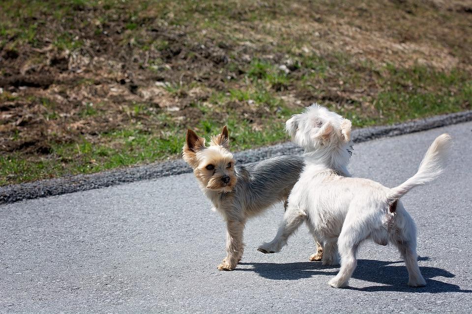 hunde kennenlernen kennenlernen in kiel
