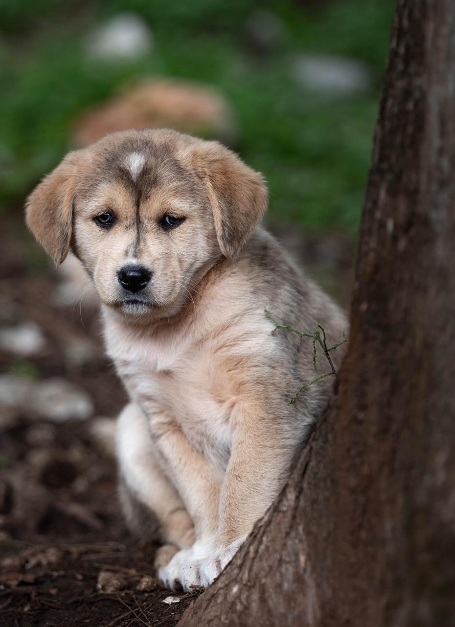 Картинка щенка грустного