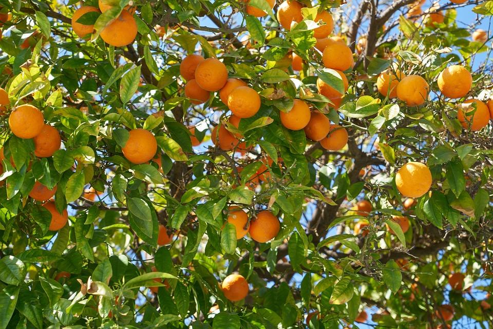Orange, Fruits, Aliments, En Bonne Santé, Frais