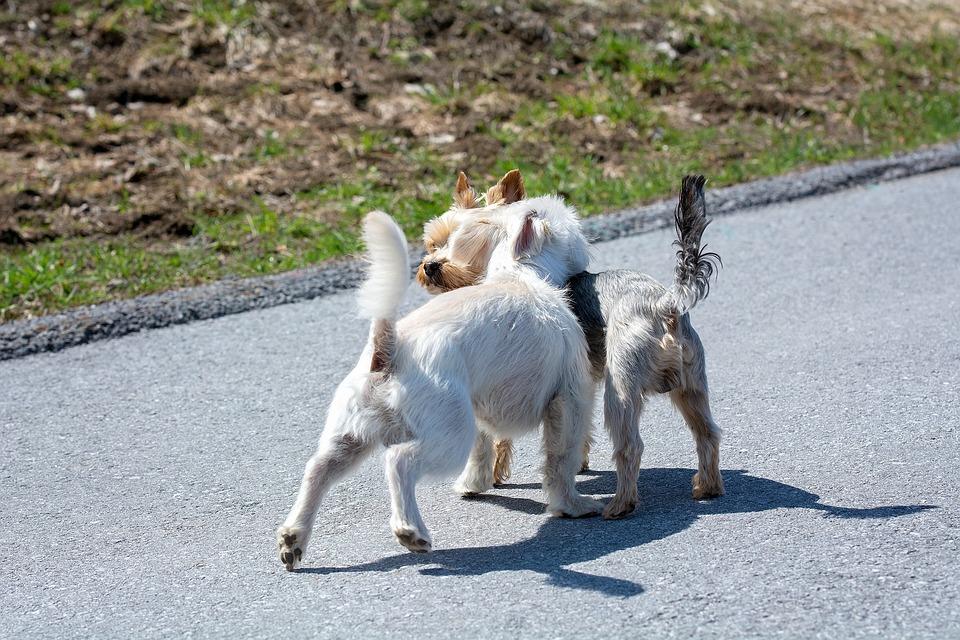 Hundar Ut Möte Små Gratis Foto På Pixabay