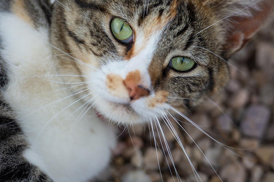 f71b736aa68e Γάτα Ζώο Κατοικίδιο - Δωρεάν φωτογραφία στο Pixabay