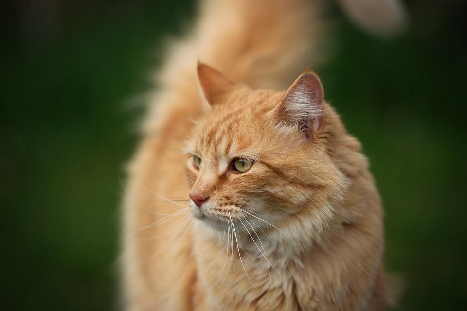 8f551ca5d314 Γάτα Ζώο Kitty - Δωρεάν φωτογραφία στο Pixabay