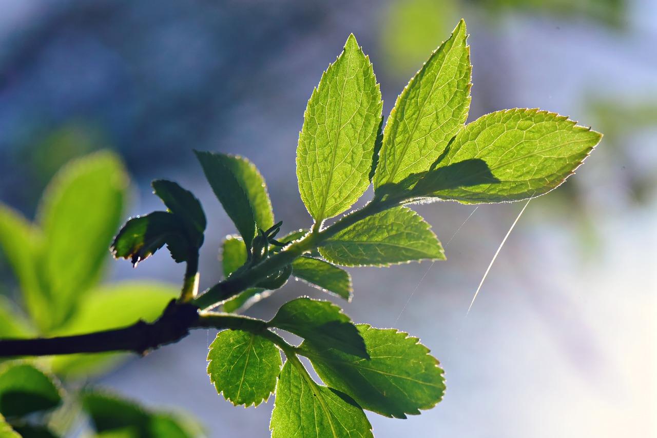 Картинка листочка весеннего