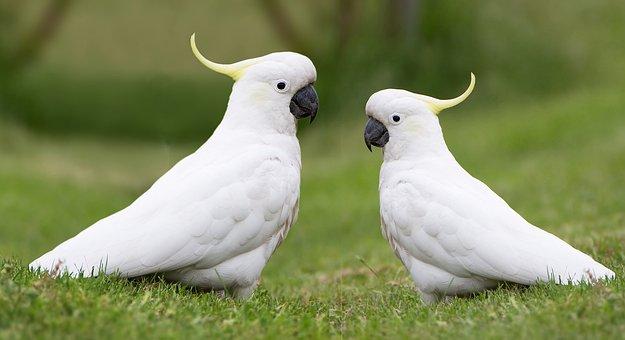 920 Koleksi Gambar Binatang Burung Kakatua Terbaik