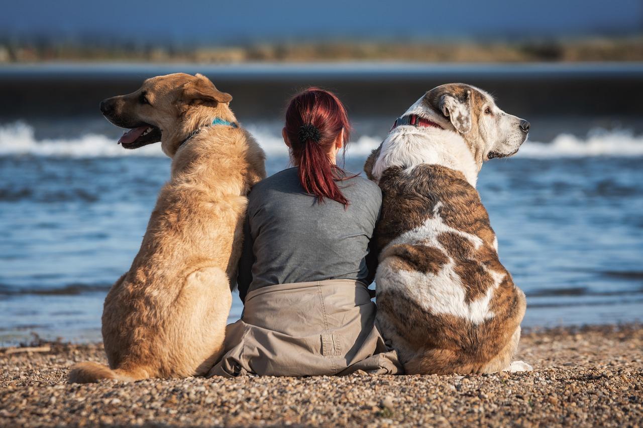 Friends Dog Pet - Free photo on Pixabay