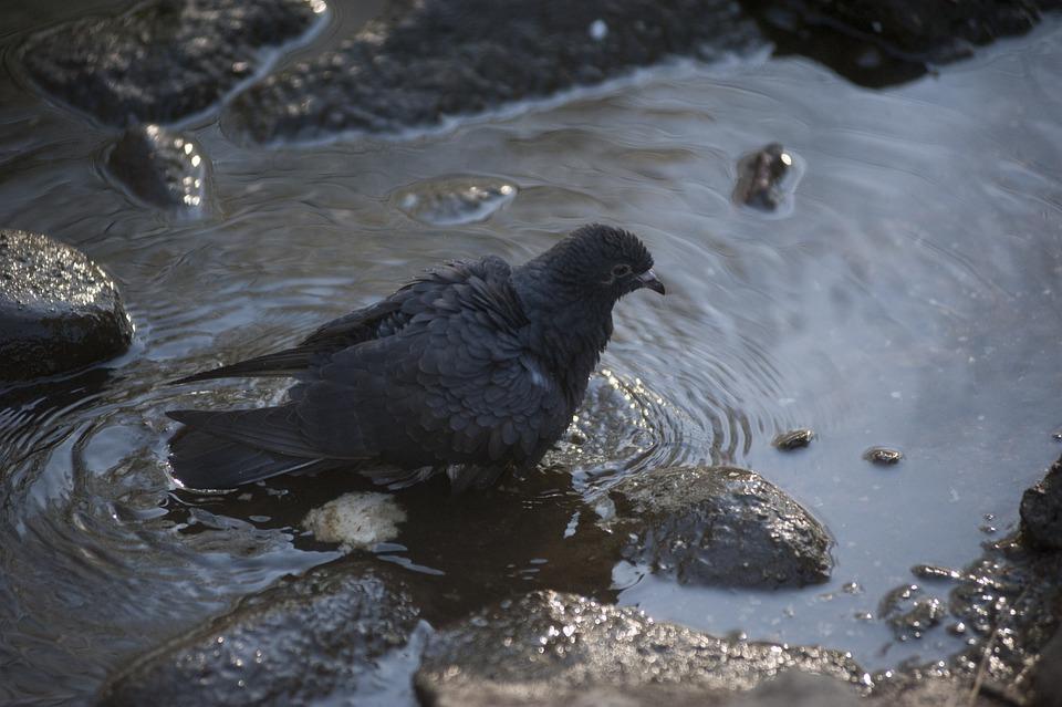 Fotky zdarma z velkých černých ptáků