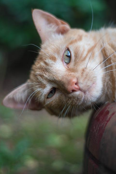 054c7ec6067f Γάτες Δείτε Nat - Δωρεάν φωτογραφία στο Pixabay